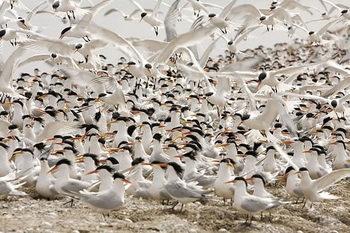 Flock of twitterers